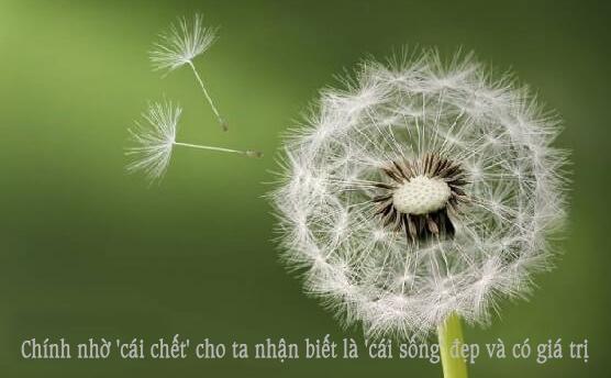 chinh_nho_cai_chet_cho_ta_nhan_biet_la_cai_song_dep_va_co_gia_tri_.jpg