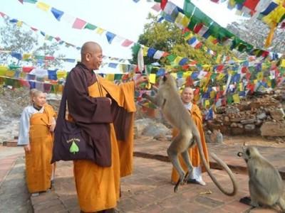 Năm Bính Thân nói chuyện cái bẫy khỉ