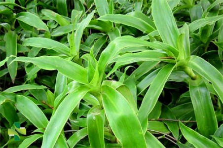 70 cây thuốc nam chữa bệnh quý báu và phổ biến ở Việt Nam