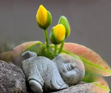 Đức Phật chỉ bày năm pháp làm gia tăng tuổi thọ