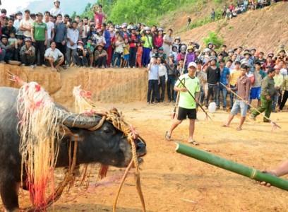 Dân làng kiệt quệ, làm ăn thất bát vì lễ đâm trâu tế thần linh