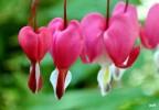 Hương của hoa yêu thương
