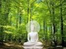 Biến đổi khí hậu môi trường từ góc nhìn đạo Phật