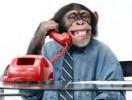 Tết Bính Thân tản mạn về tâm khỉ