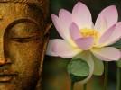 Tâm Phật ví như hoa sen
