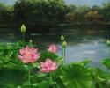 Cư sĩ được Phật khen là ngọc quý, sen thơm