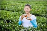 Uống trà lúc nào để trị bệnh và có lợi cho sức khỏe ?