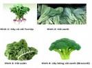 Từ các báo cáo khoa học, Viện dinh dưỡng Hoa Kỳ công bố kết quả về chế độ ăn chay