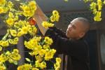 Mùa xuân trong nét đẹp người tu xuất gia và tại gia